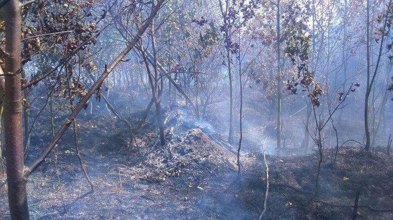 Požár lesa Hrabačov 2