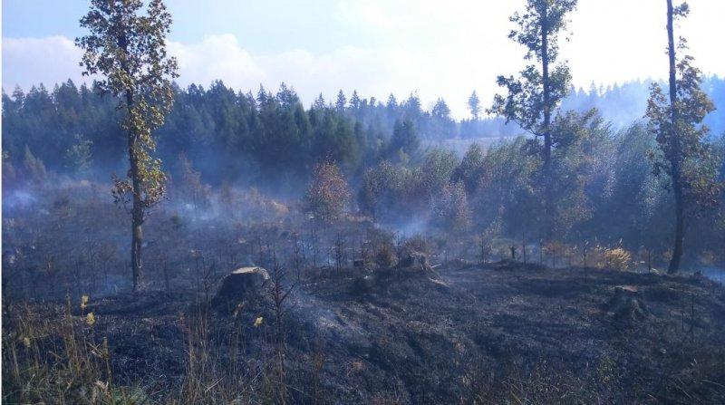Požár lesa Hrabačov 4