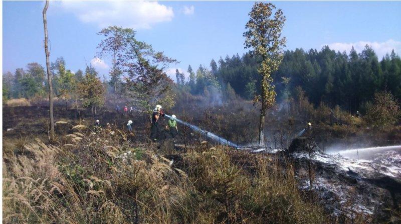 Požár lesa Hrabačov 6